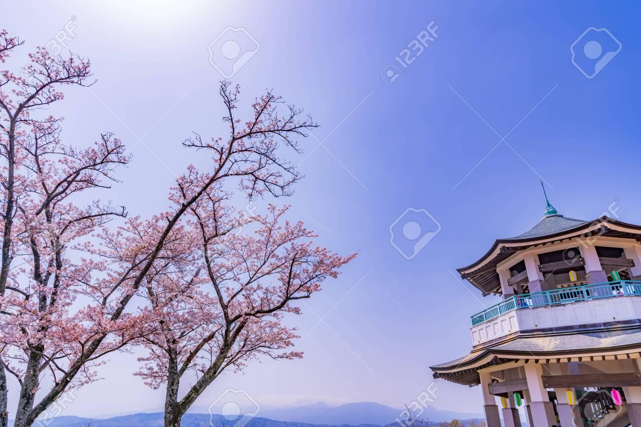 Spring in Japan, Hagino, Kanagawa. Cherry Blossoms in Koboyama Park - 136712441