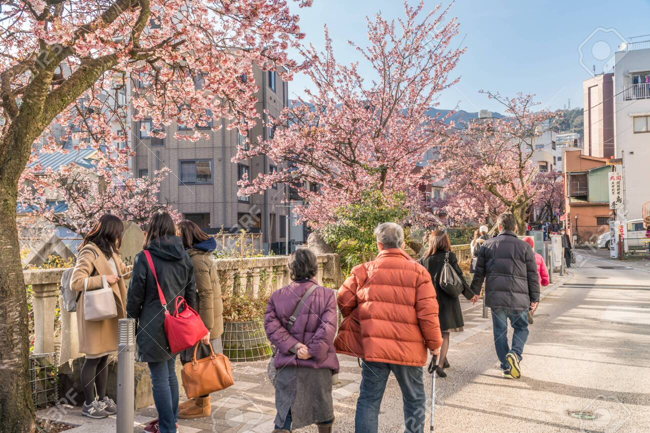 Spring in Japan, Atami Hot Spring Early Blooming Cherry Blossoms Along the ito River - 143860497