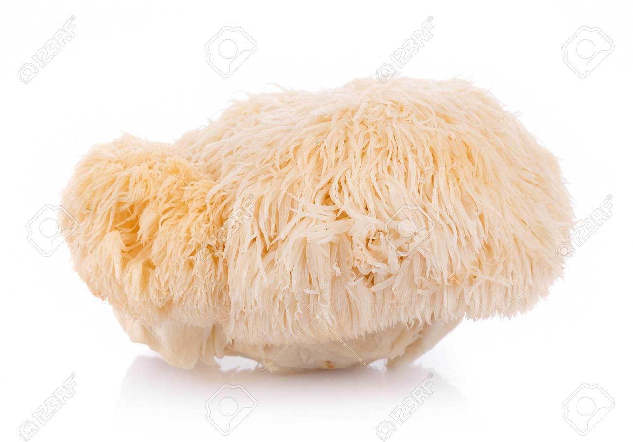lion mane mushroom isolated on white background - 120715232
