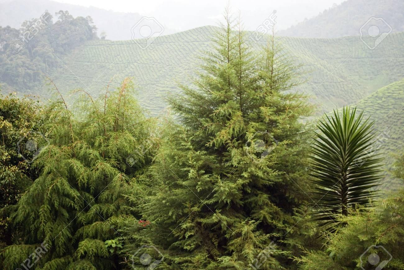 Tropical Highland Forest Hazy Highland Forest