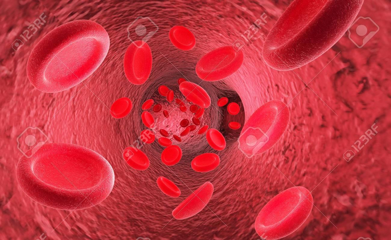 Glóbulos Rojos Eritrocitos En El Interior Del Vaso Sanguíneo ...