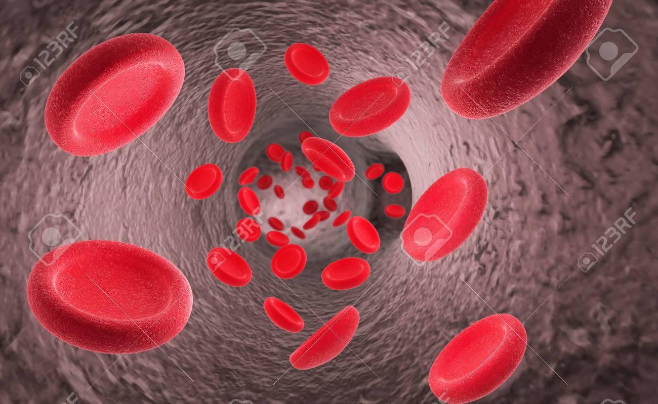 Rote Blutzellen Erythrozyten Im Inneren Des Arteriellen Oder ...