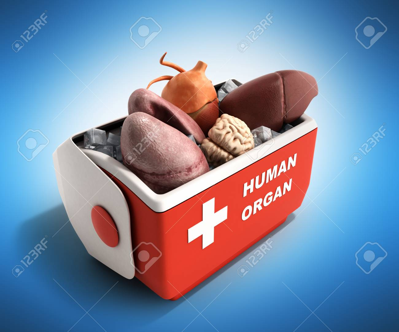 Kühlschrank Box : Organ transport konzept öffnen menschlichen organ kühlschrank box