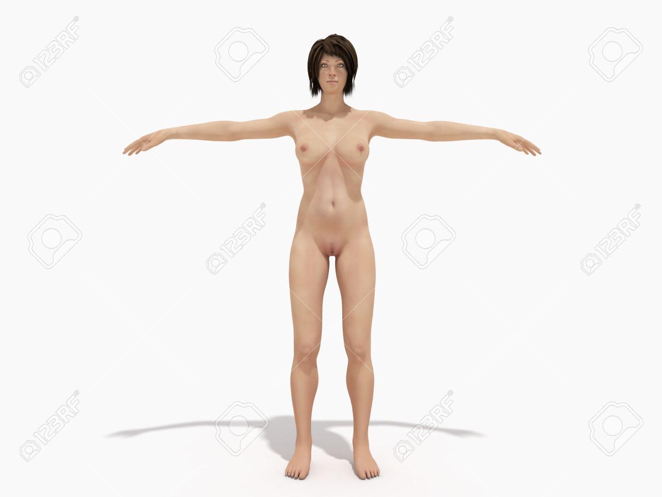 Un Cuerpo De Mujer Para Libros Sobre Anatomía 3d Render En Blanco ...