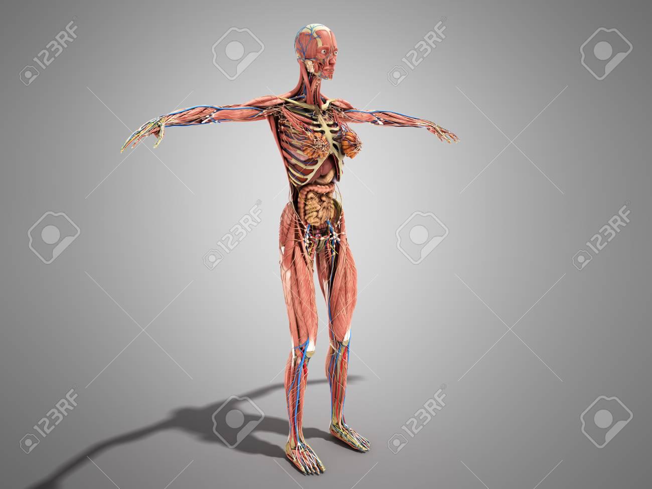 Eine Anatomie Des Weiblichen Körpers Für Bücher 3d Ilustration Auf ...