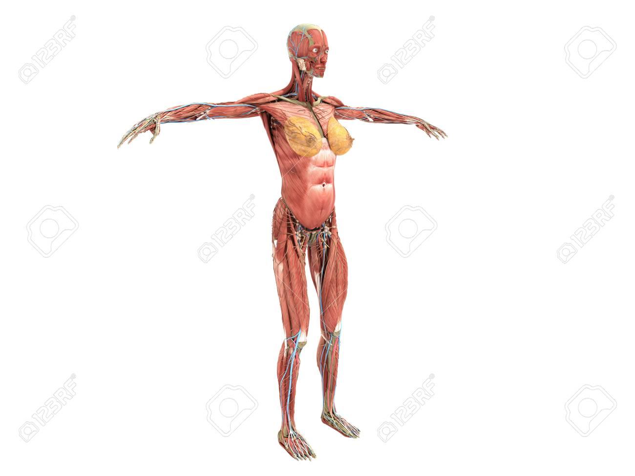 Beste Körperanatomie Fotos - Anatomie Ideen - finotti.info