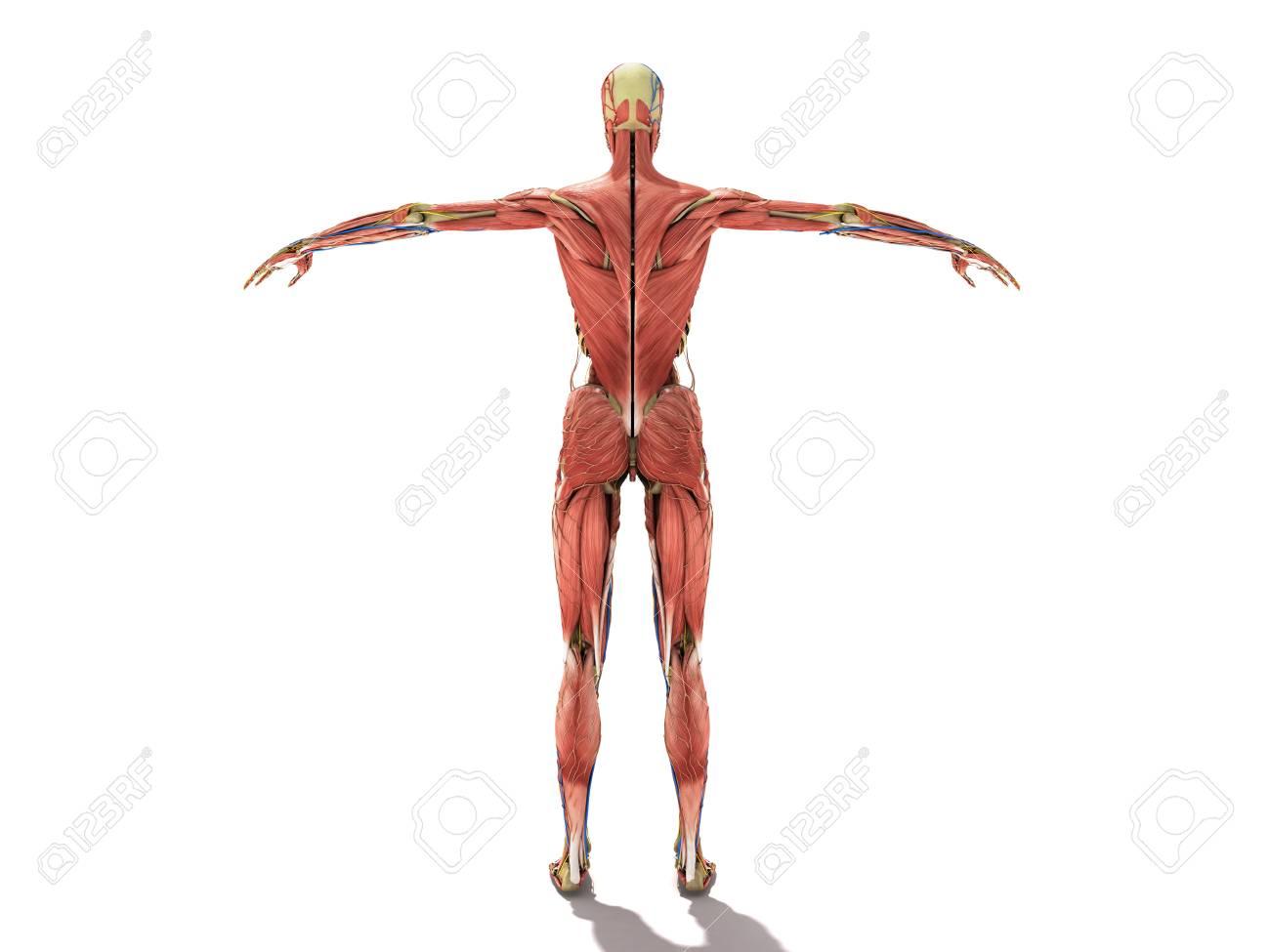 Ungewöhnlich 3d Herzanatomie Fotos - Anatomie Von Menschlichen ...