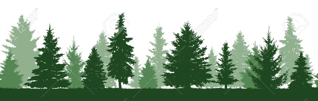 Seamless pattern of forest fir trees silhouette. Coniferous green spruce. Vector - 111717443