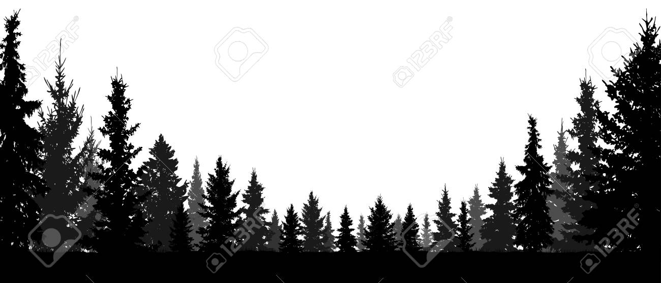 Forest, coniferous trees, silhouette vector background. Tree, fir, christmas tree, spruce, pine - 116568113