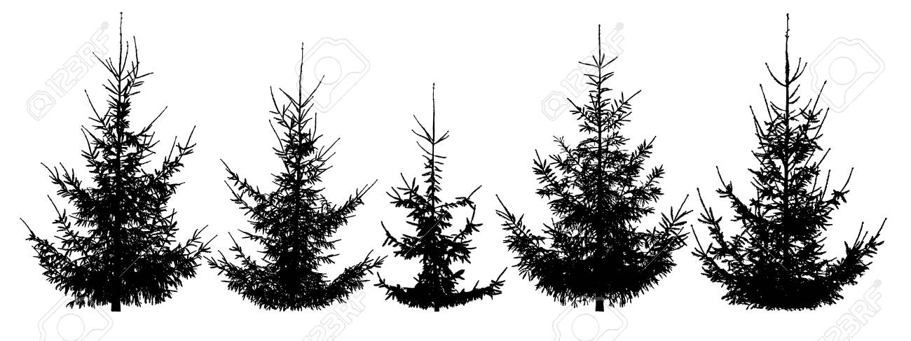 Christmas Trees Silhouette.Forest Christmas Trees Set Isolated Vector Silhouette