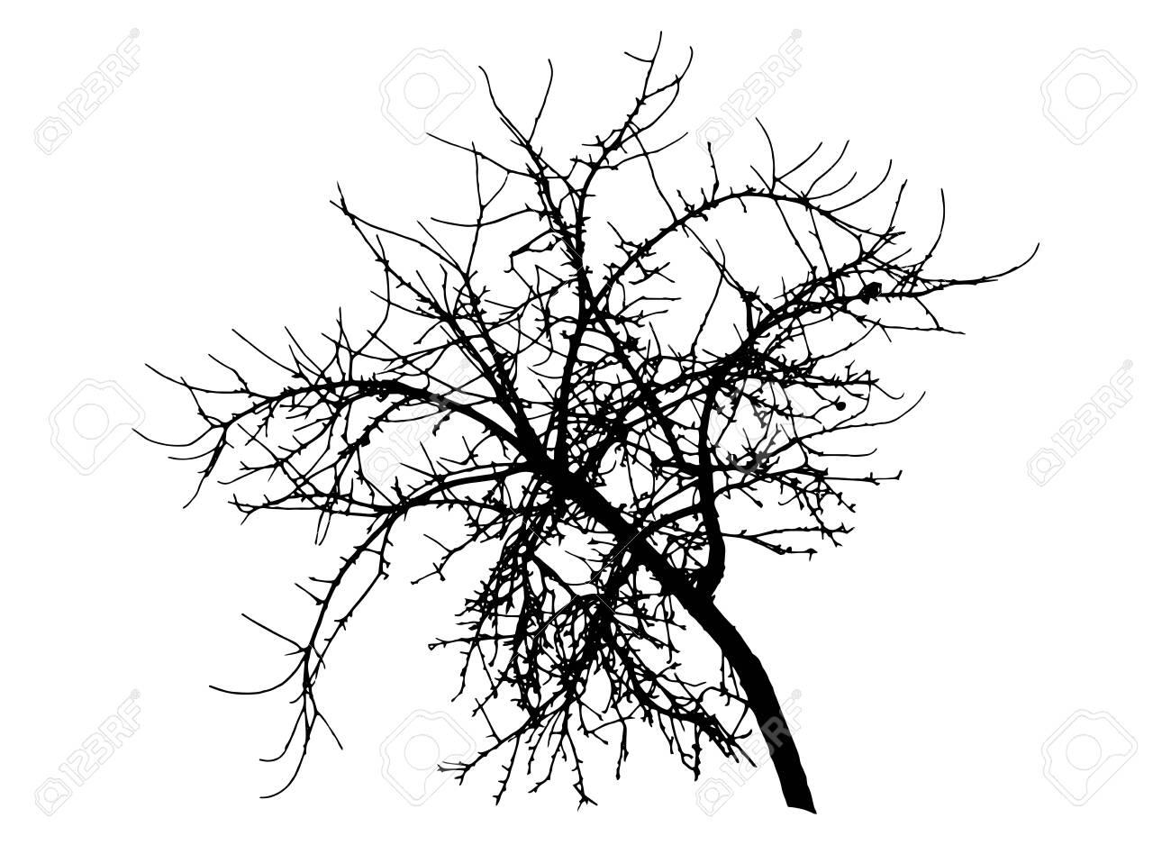 Bare branch apple tree silhouette, vector illustration. - 137361838