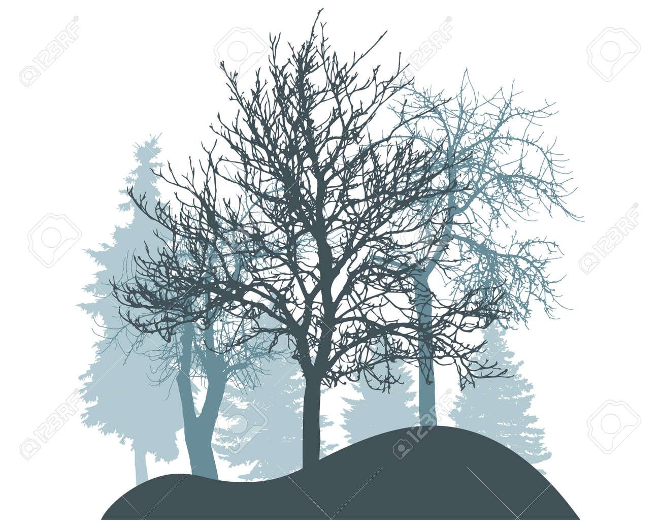 Winter season, silhouette of snowy fir trees, trees. Beautiful nature, woodland. Vector illustration - 164642174