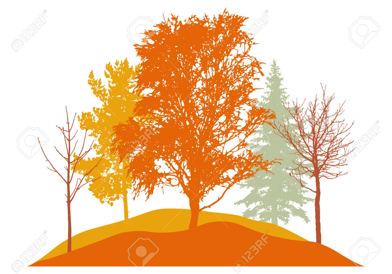 Autumn season, silhouette of birch, trees, fir trees and other. Beautiful nature, woodland. Vector illustration - 164642180