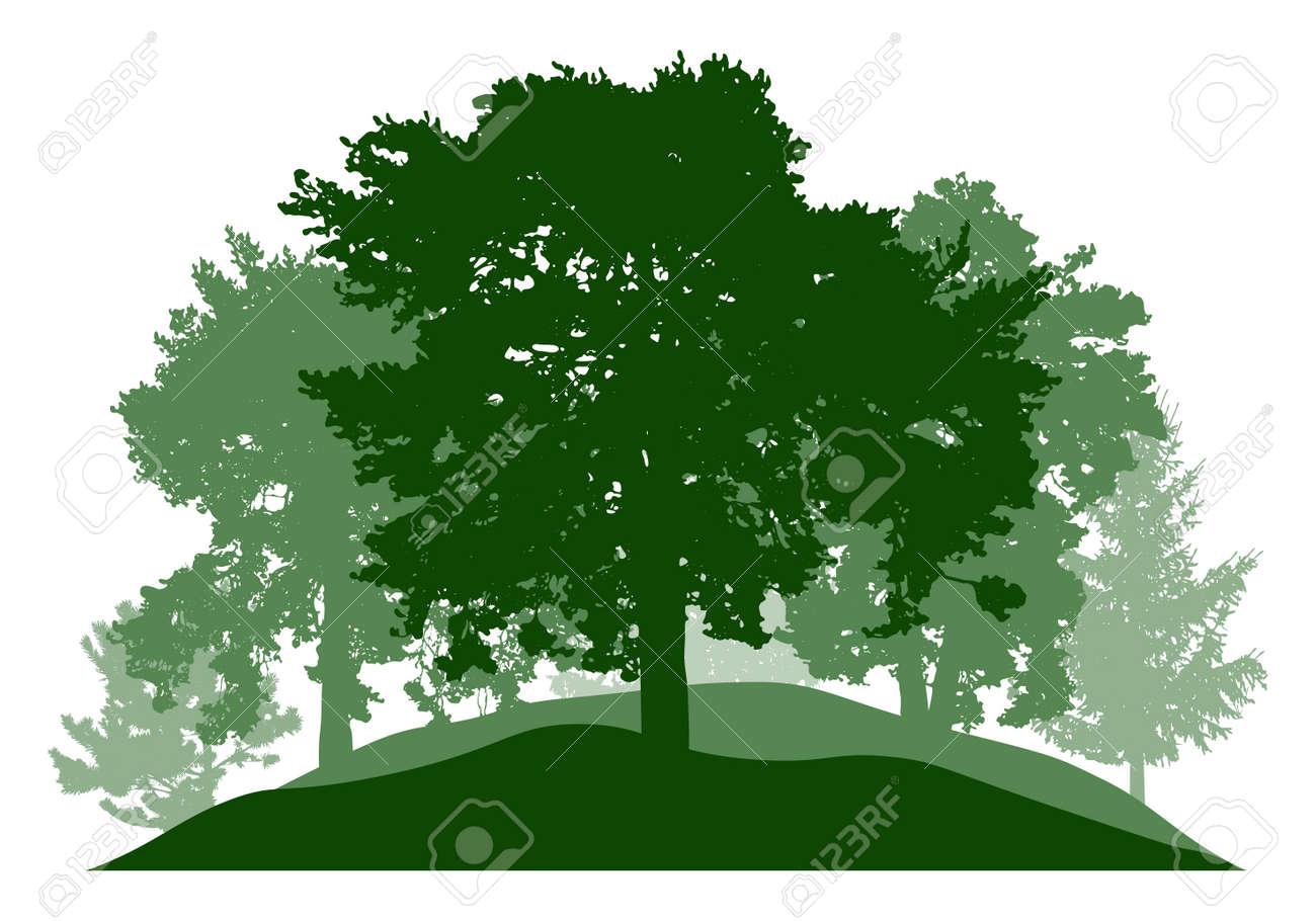 Summer season, silhouette of oak, poplar, pine, fir trees. Beautiful nature, woodland. Vector illustration - 164644846