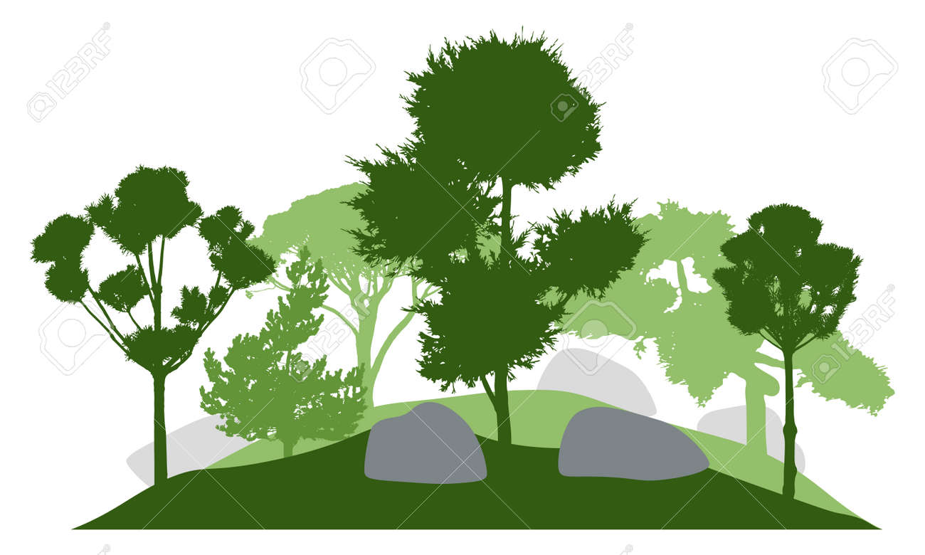 Silhouette of garden with decorative trees. Beautiful coniferous trees. Vector illustration. - 165168399