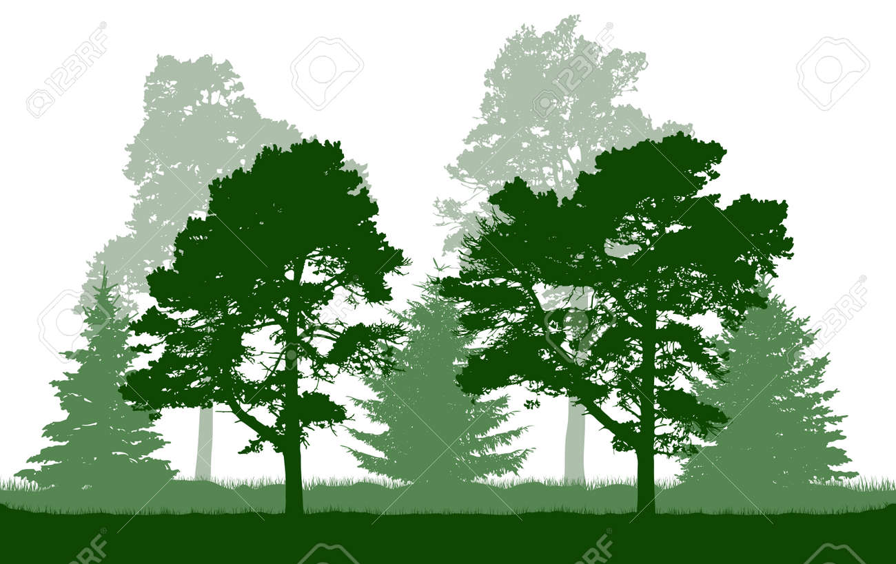 Silhouette of green pine, fir, coniferous trees. Beautiful summer forest. Vector illustration. - 165168667