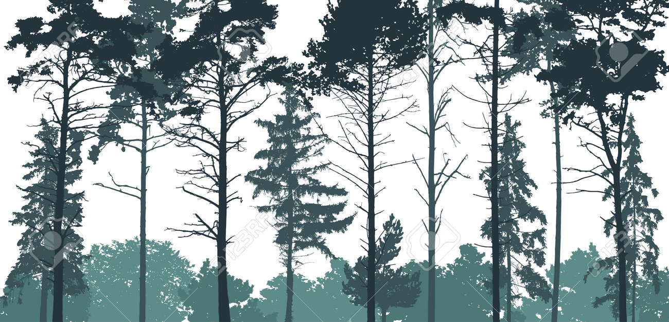 Pine forest silhouette. Natural coniferous trees. Beautiful landscape, woodland. Vector illustration - 166498553