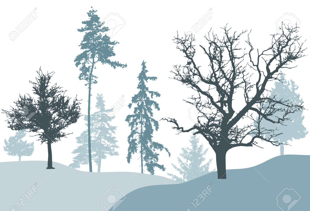 Winter forest, silhouette of tree, spruce, pine. Beautiful nature, landscape. Vector illustration - 170586867