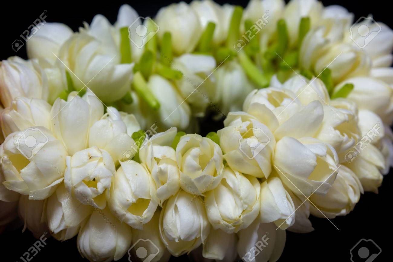 Fresh Jasmine Garland The Flower In Thai Traditional Style Stock