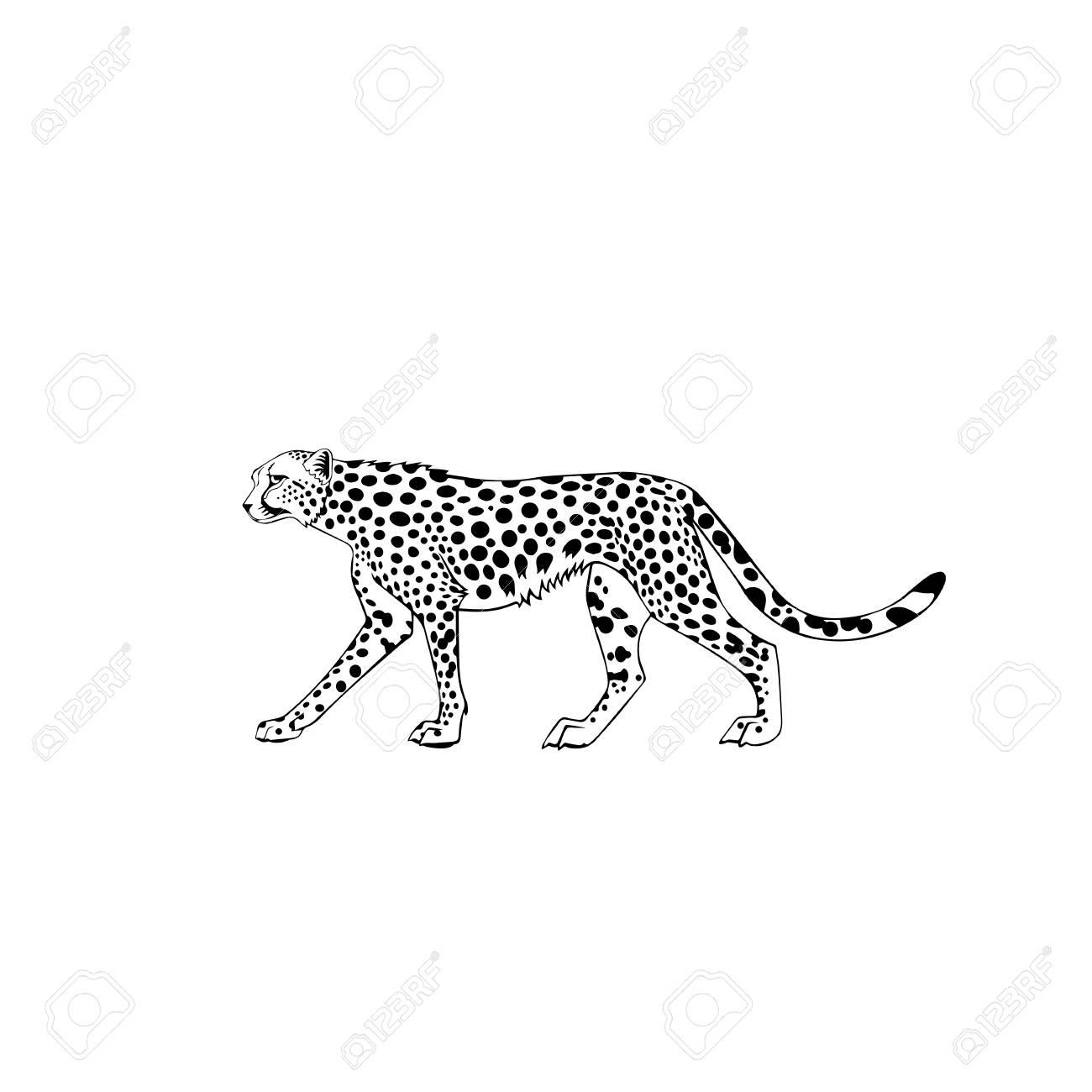 Cheetah Tattoo Design Royalty Free Cliparts Vectors And Stock Illustration Image 77529170