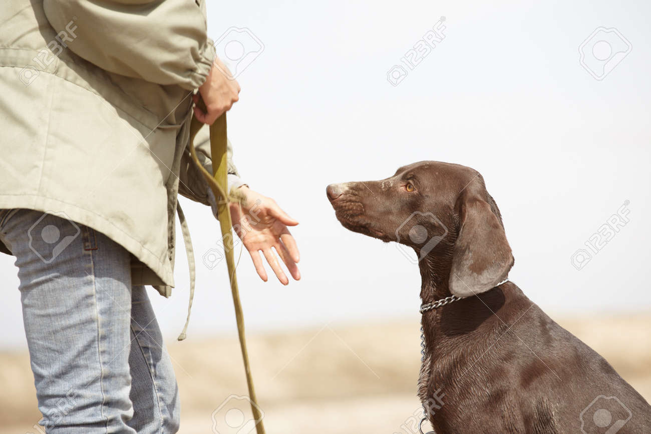 German short-haired pointer Kurzhaar and trainer outdoors. Natural light and colors - 9168423