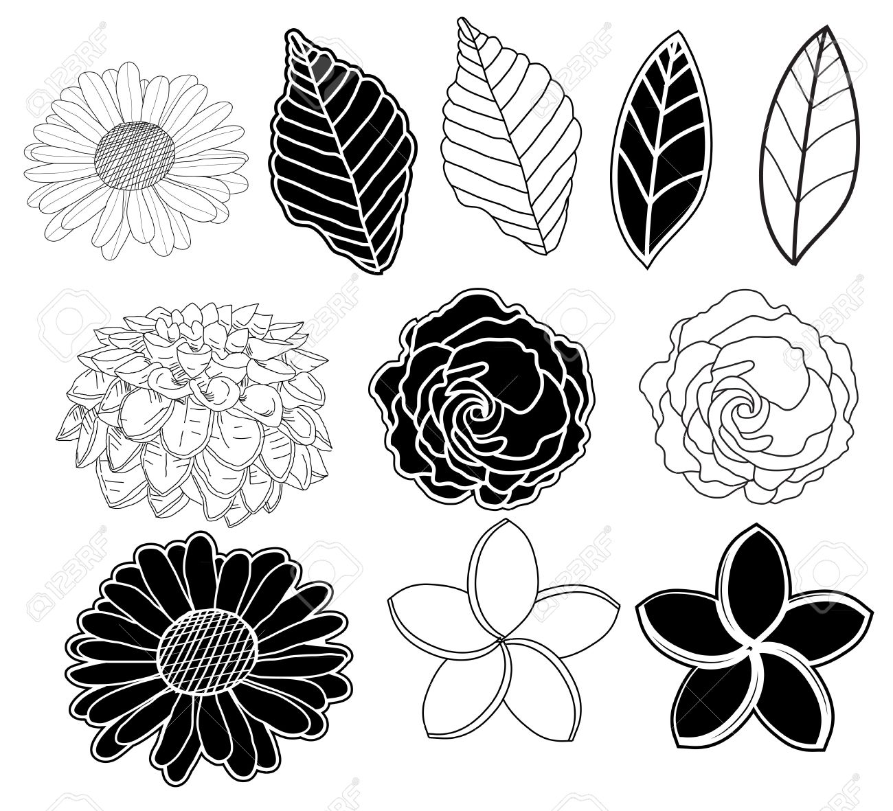 Floral Design With Leaf And Flower In Black And White Royalty Free