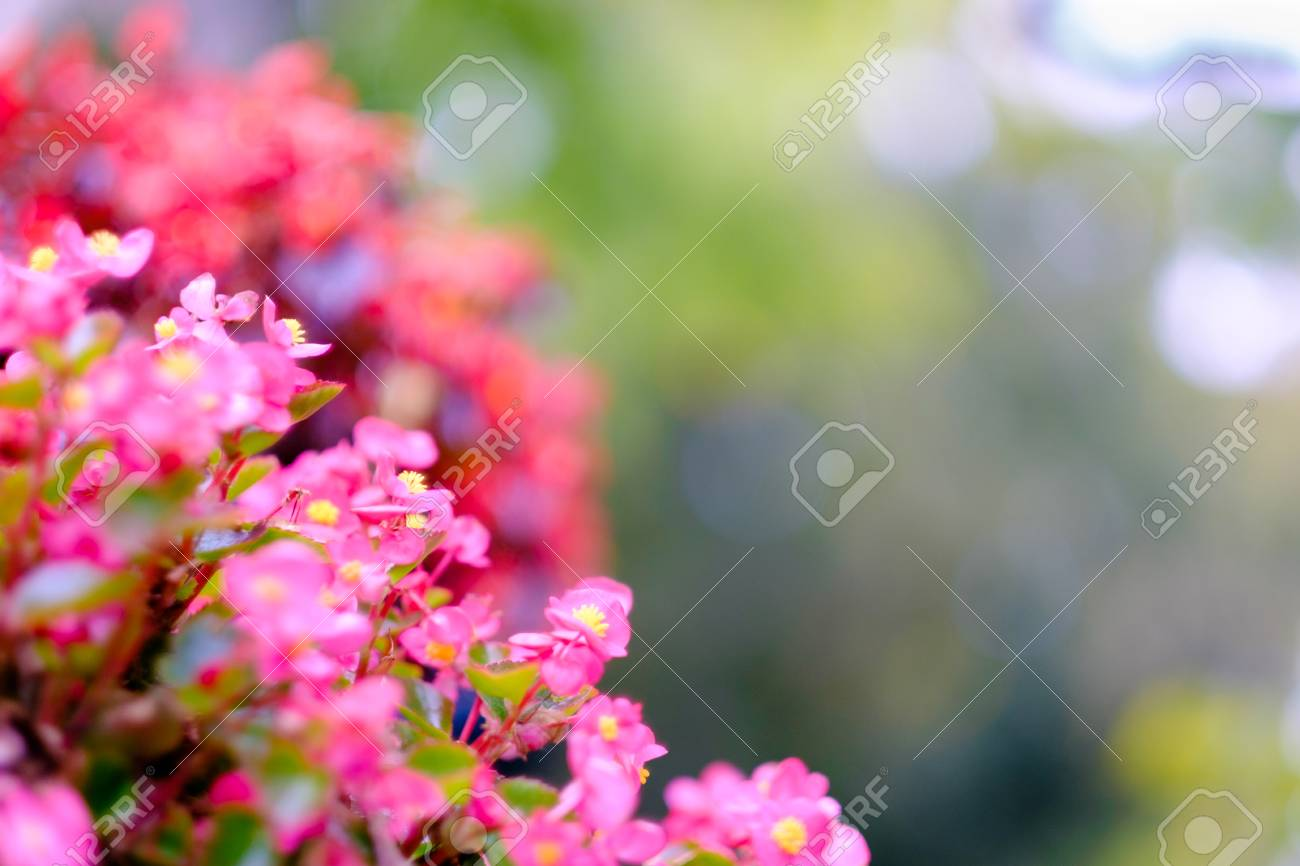 Beautiful Little Pink Flowers With A Heavily Blurred Background