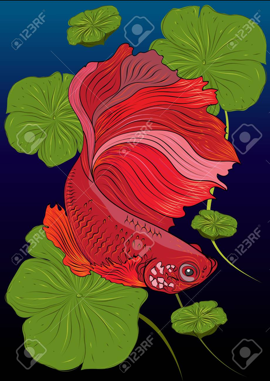 Vector Color Drawing Of Betta Or Simese Fighting Fish Illustation ...