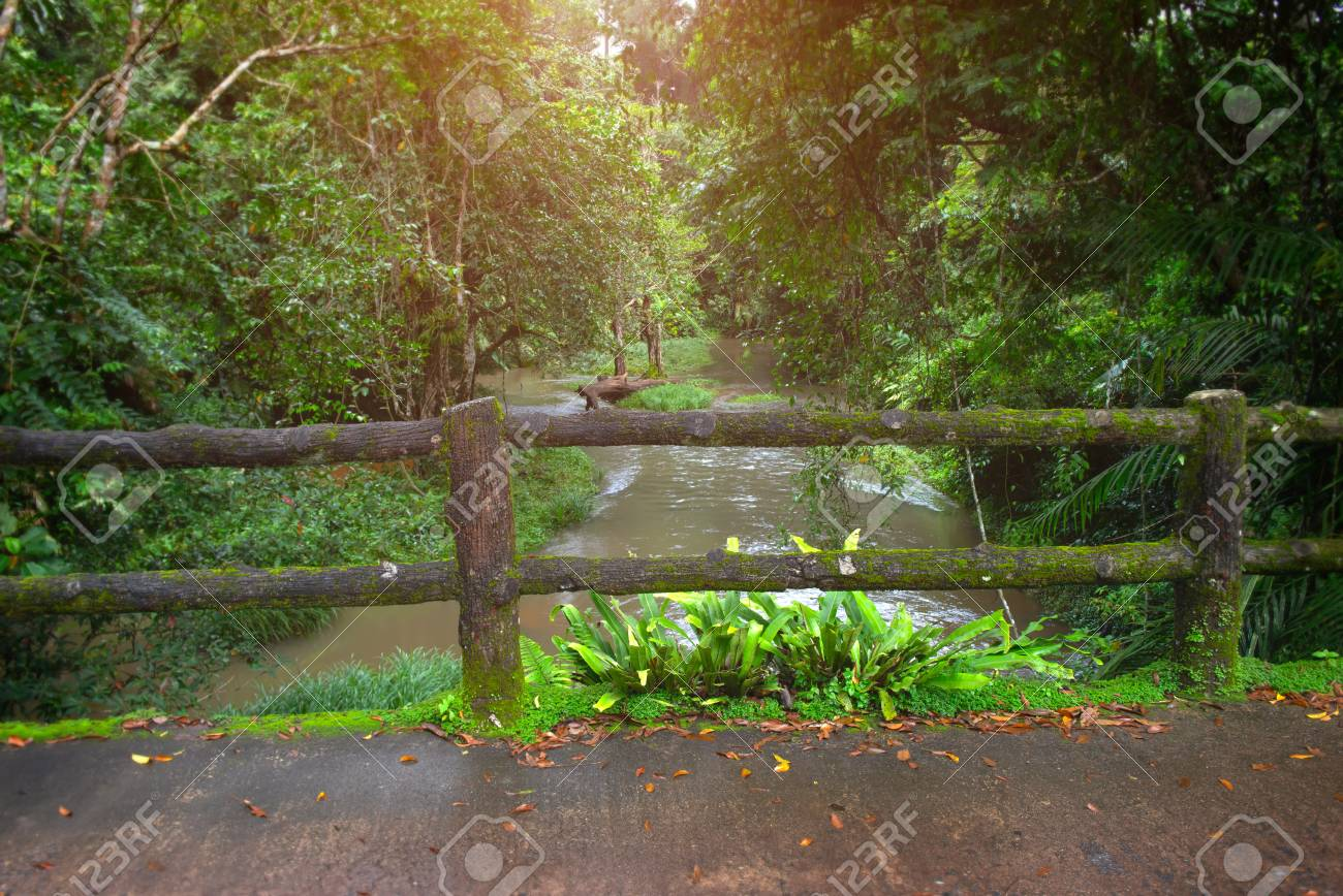 Save Money Use Trees As Fence Posts Hobby Farms
