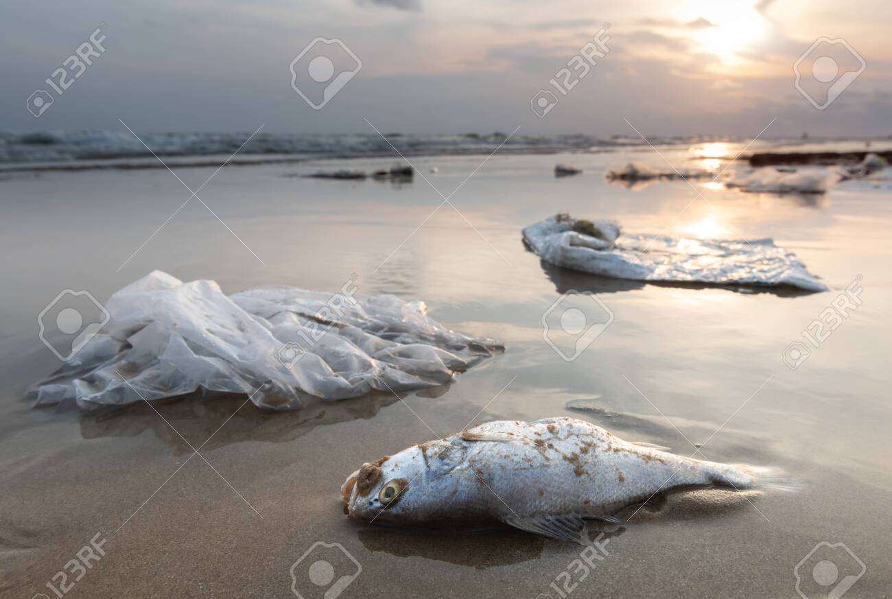 Death fish and plastic garbage on the beach in pollution sea scape environment with sun lighting. - 121693447