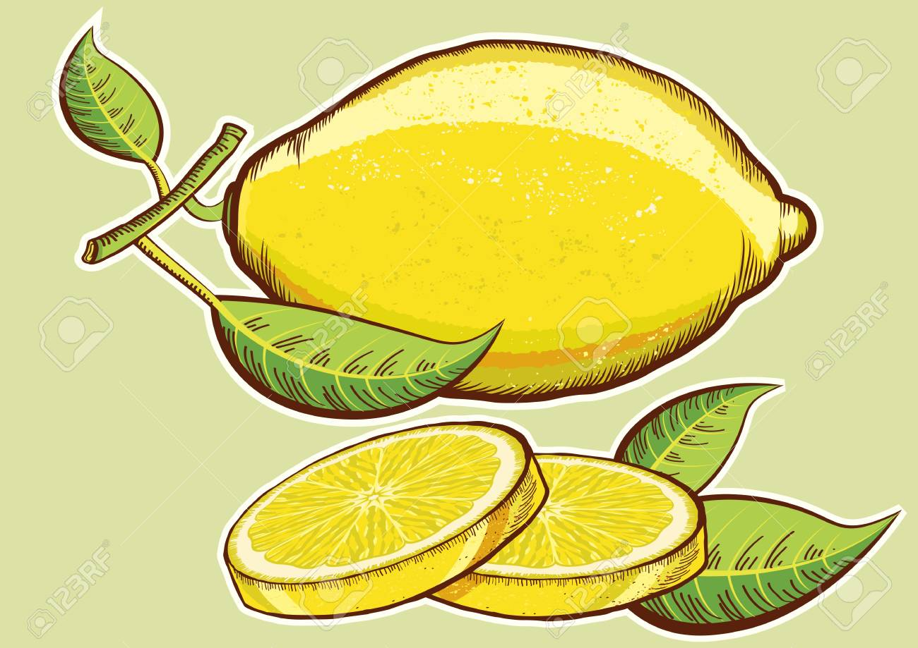 Yellow fresh lemons with green leaves isolated for design Stock Vector - 18639313