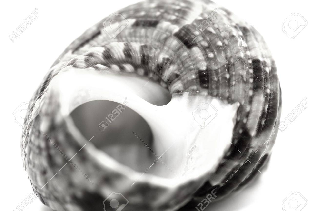 shell Stock Photo - 2021417