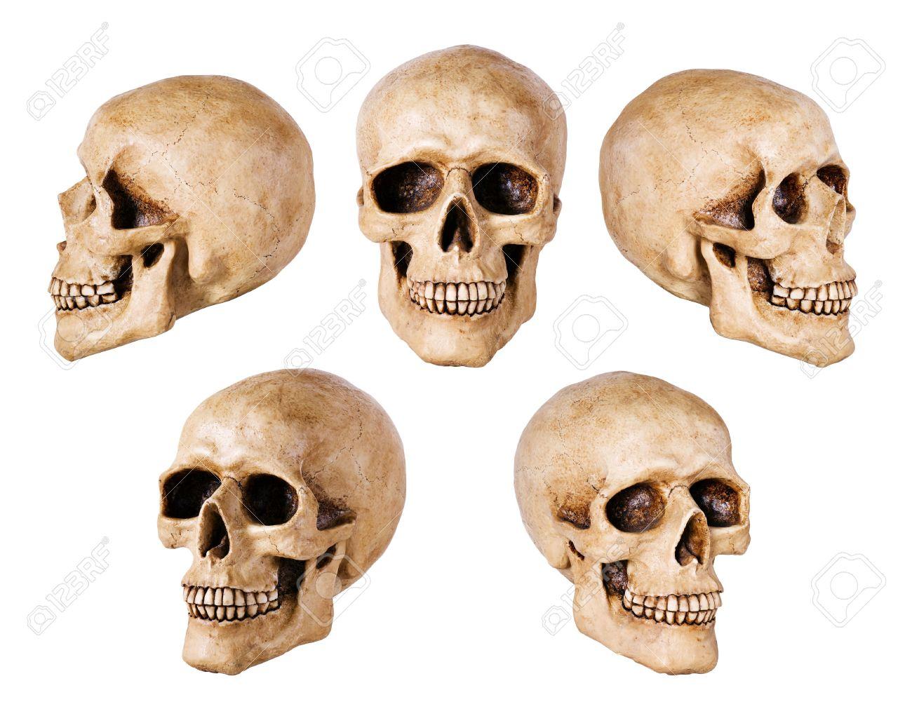 synthetical skull many angle view Stock Photo - 11036489