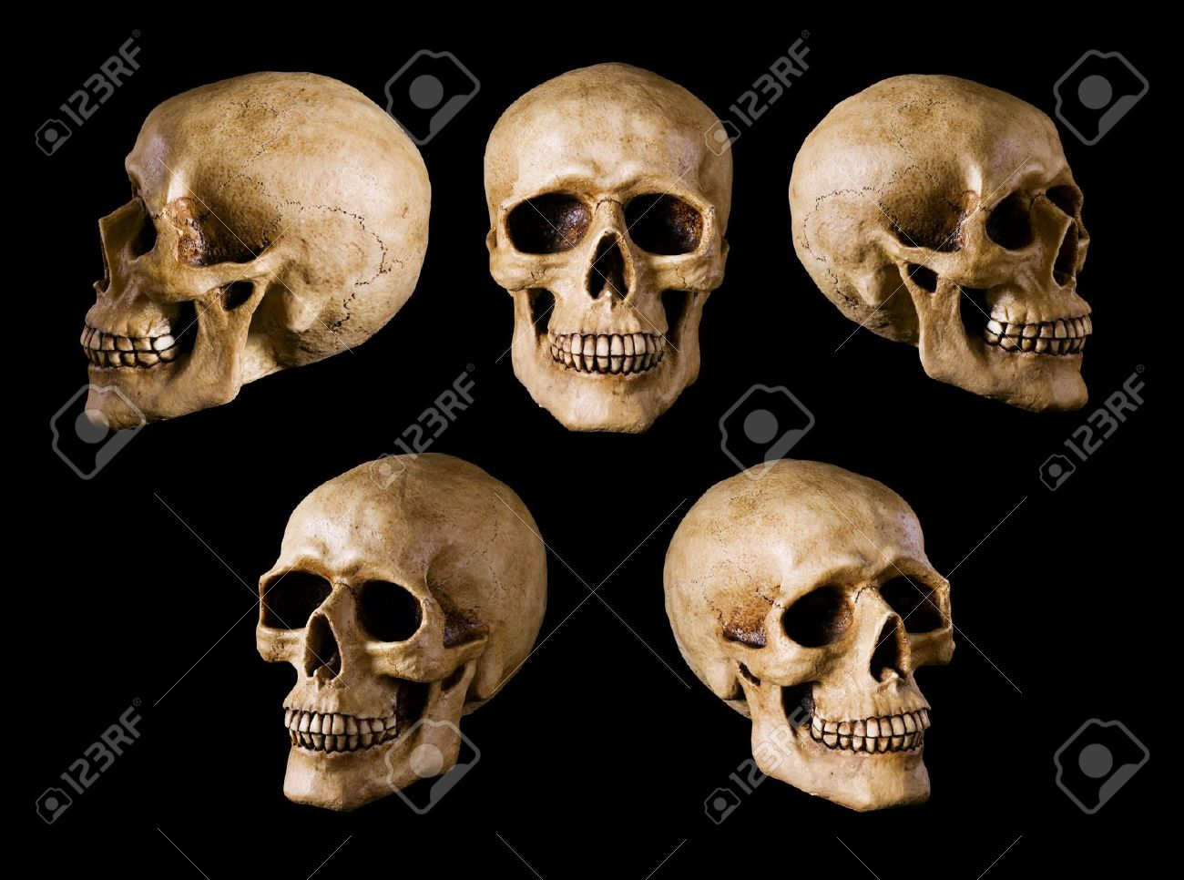 synthetical skull many angle view Stock Photo - 11036282