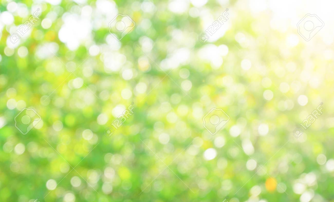 Green nature blur background image