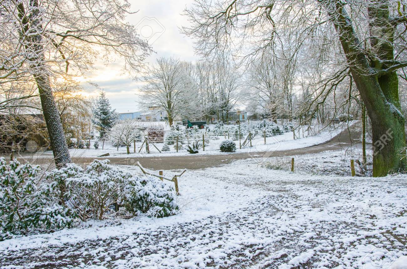 Beautiful Winter Morning In The Countryside Stock Photo Picture And
