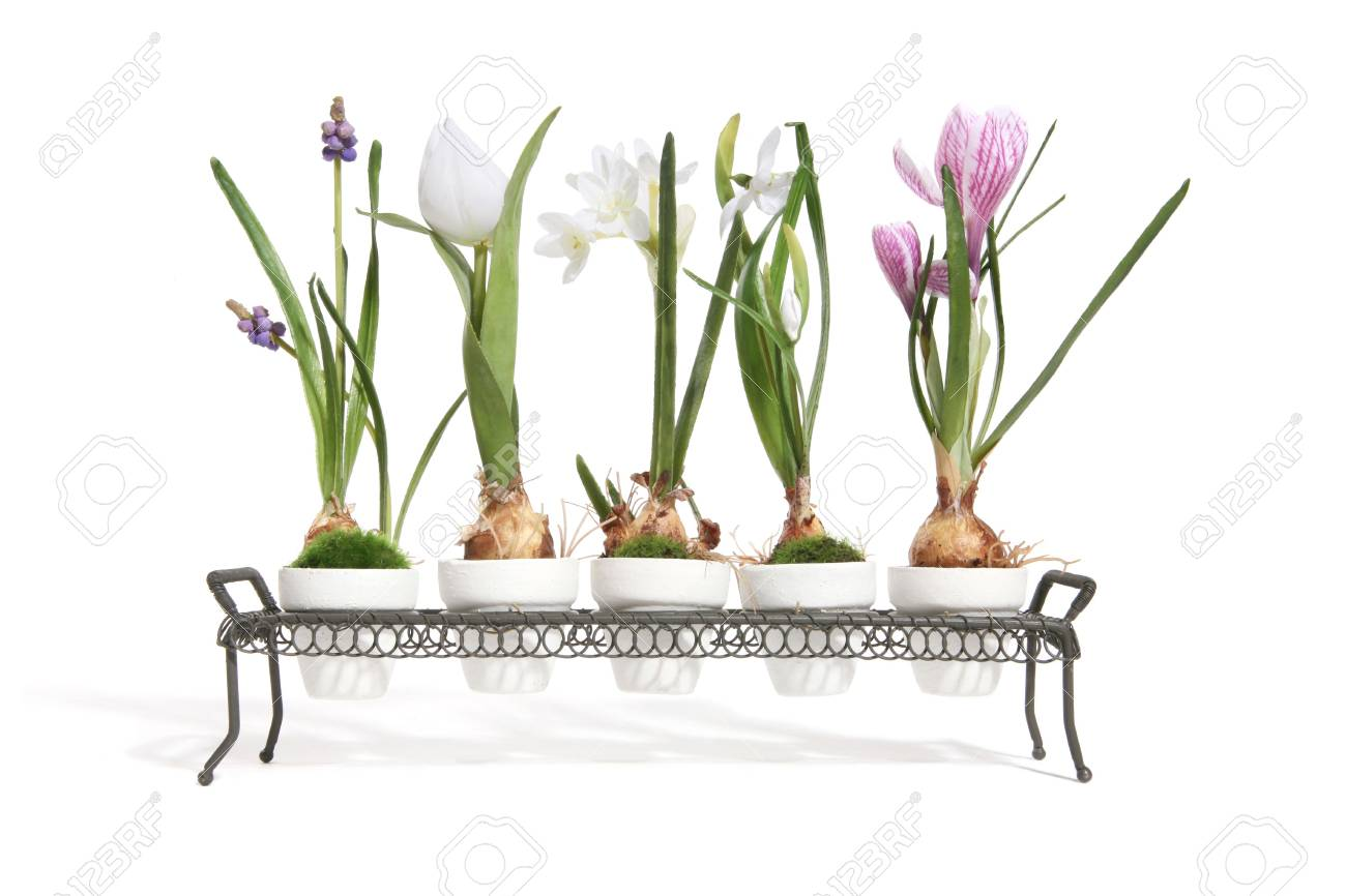 Five colorful flowers in the growth stage of life Stock Photo - 697825