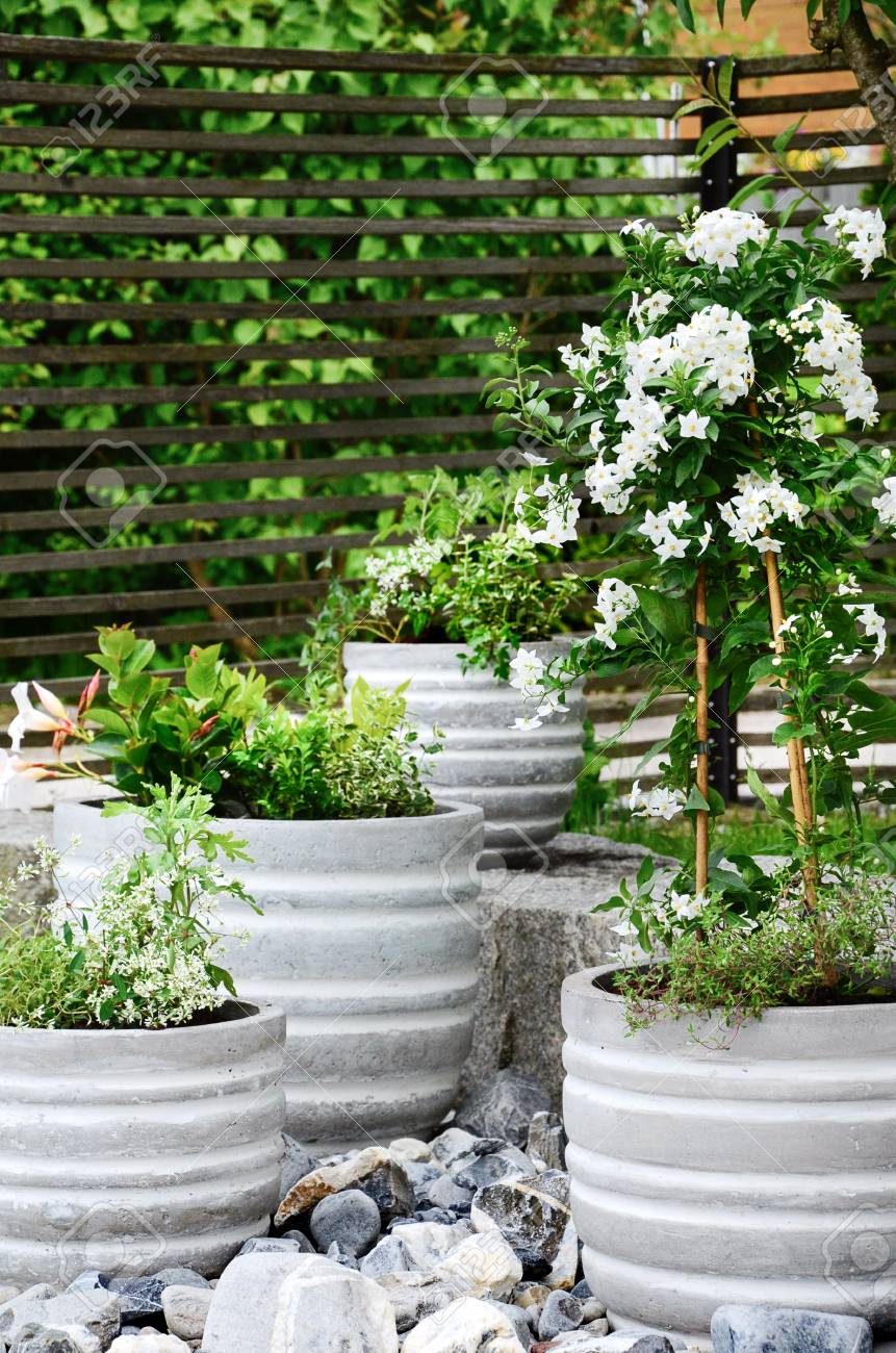 Stock Photo   Stone Garden Arrangement At House Entrance With Green And  White Plants And Concrete Plant Pots. Vertical, Close Up.