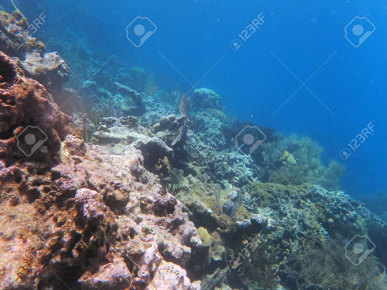 slope on water, with corals and small fish in the far - 131979347