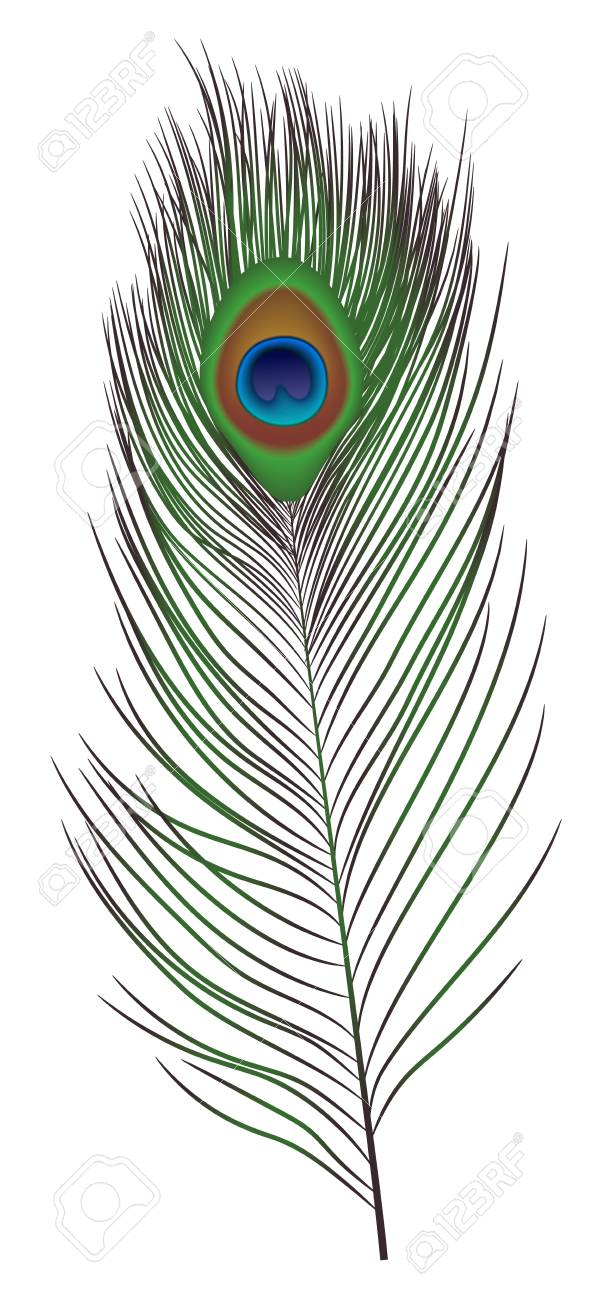 peacock feather icon realistic illustration of peacock feather royalty free cliparts vectors and stock illustration image 110112976 peacock feather icon realistic illustration of peacock feather