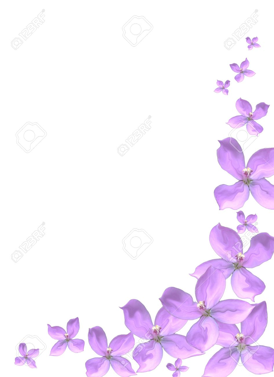 , purple flowers stock vector illustration and royalty free, Natural flower