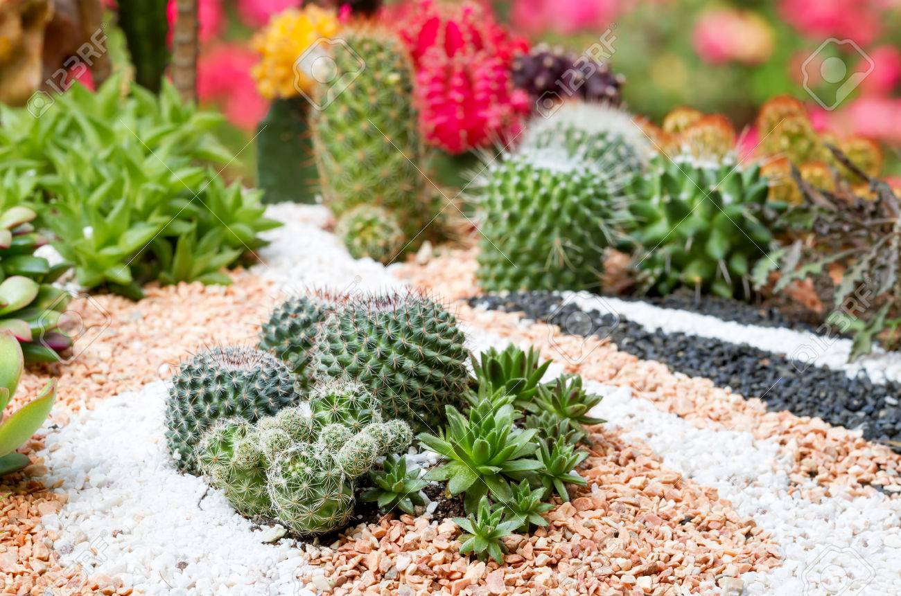 Cactus Plants And Kalanchoe Plants Decorate In Beautiful Garden ...