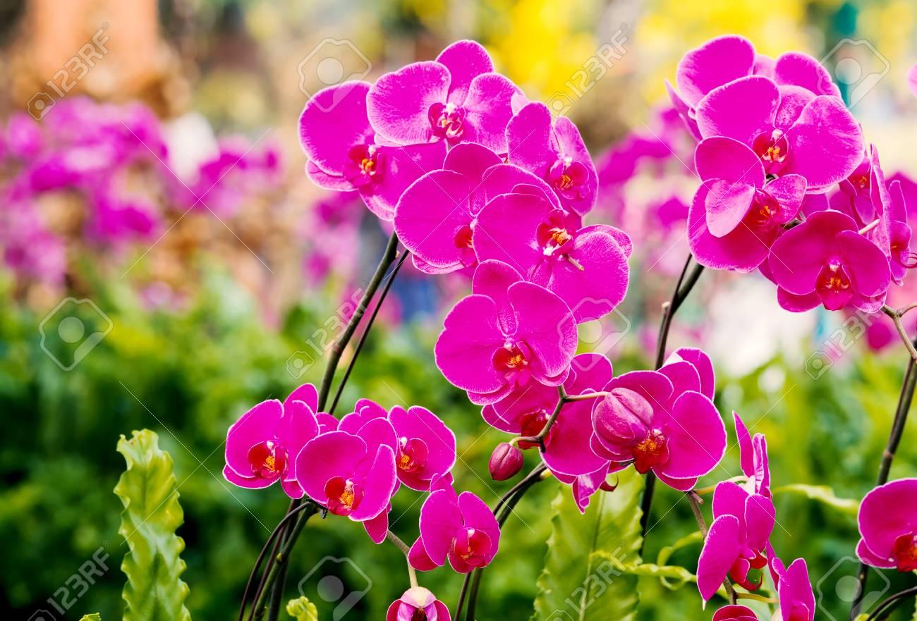 Cerca de las flores de orquídeas de color rosa que florece en el jardín de  flores
