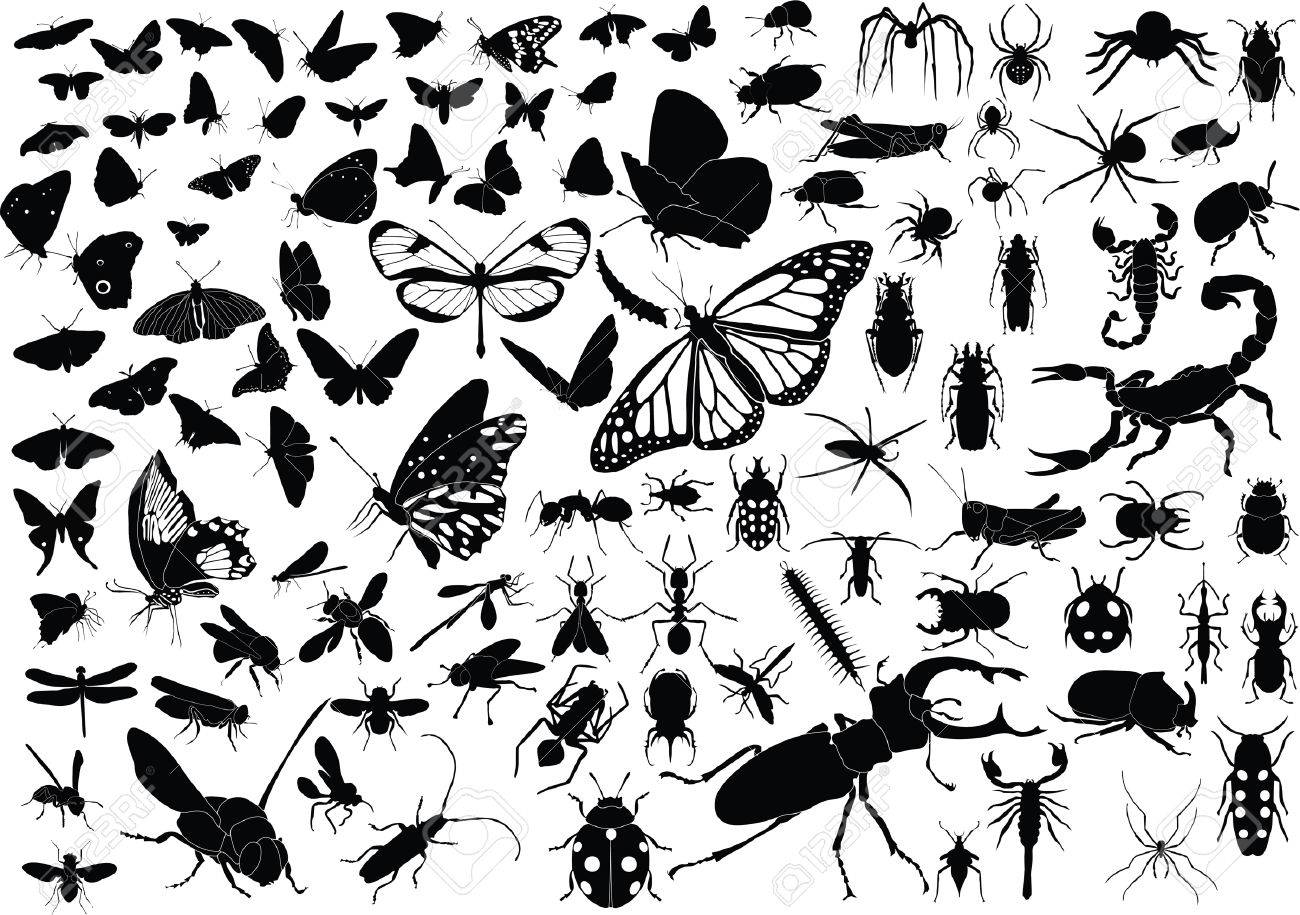 100 vector silhouettes of insects (butterflies, bugs, flies, bees ets.) Stock Vector - 5570842