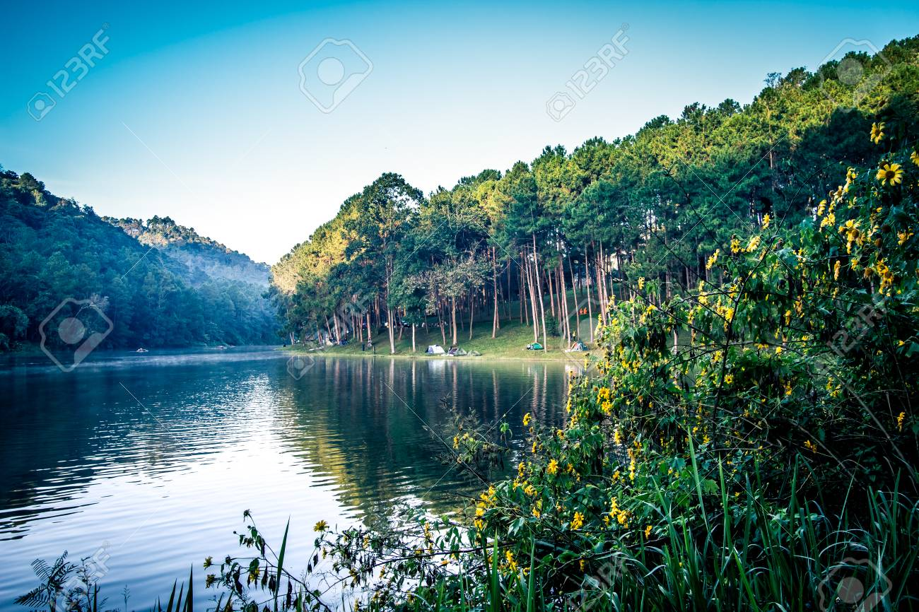 romantic morning scenery of huai pang tong reservoir and pine