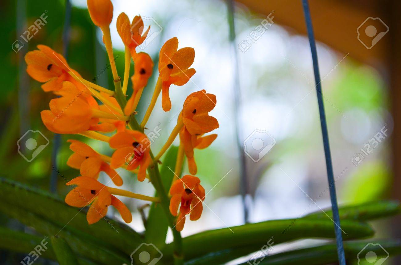 yellow orchid Stock Photo - 21383279