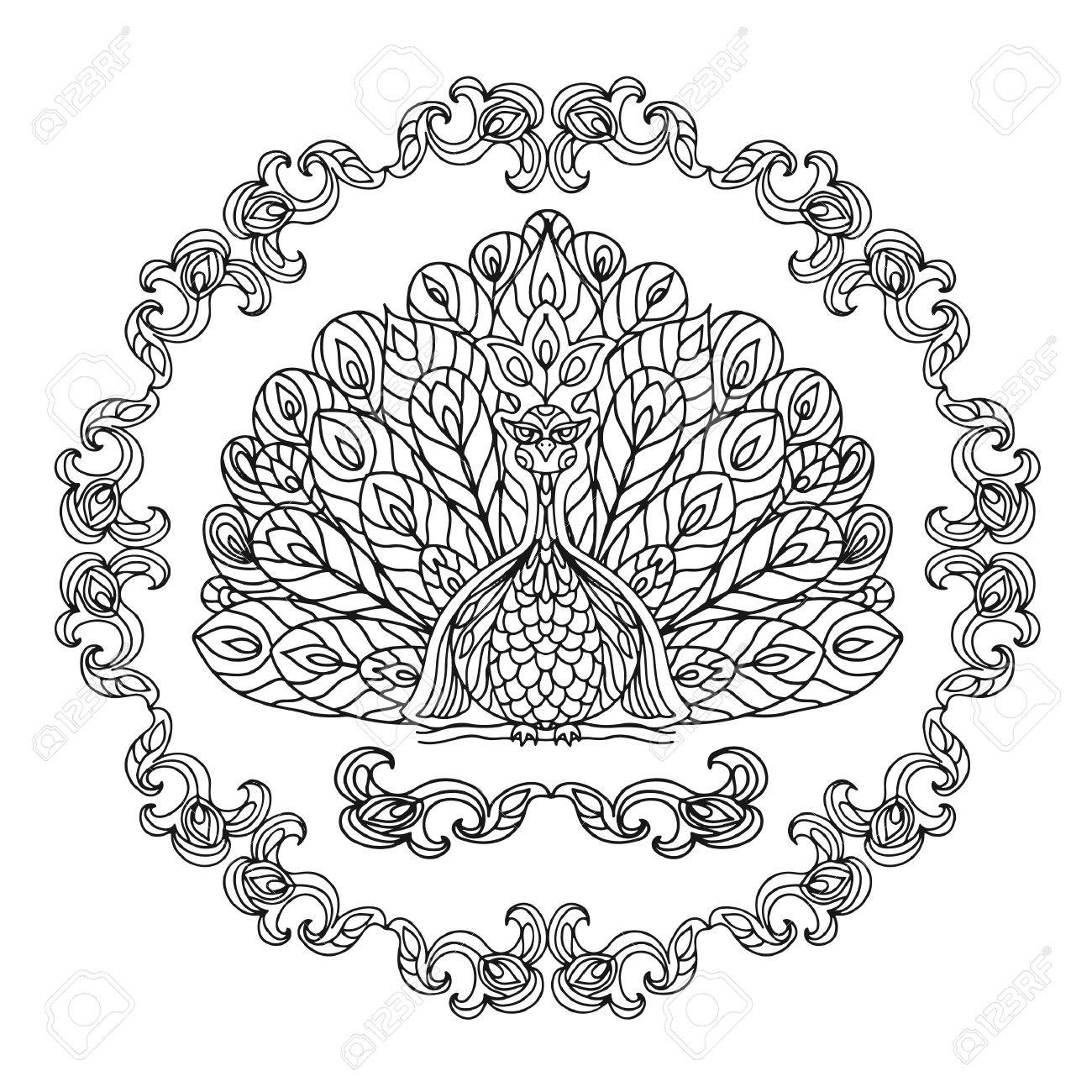 peacock coloring page stock vector 48907768