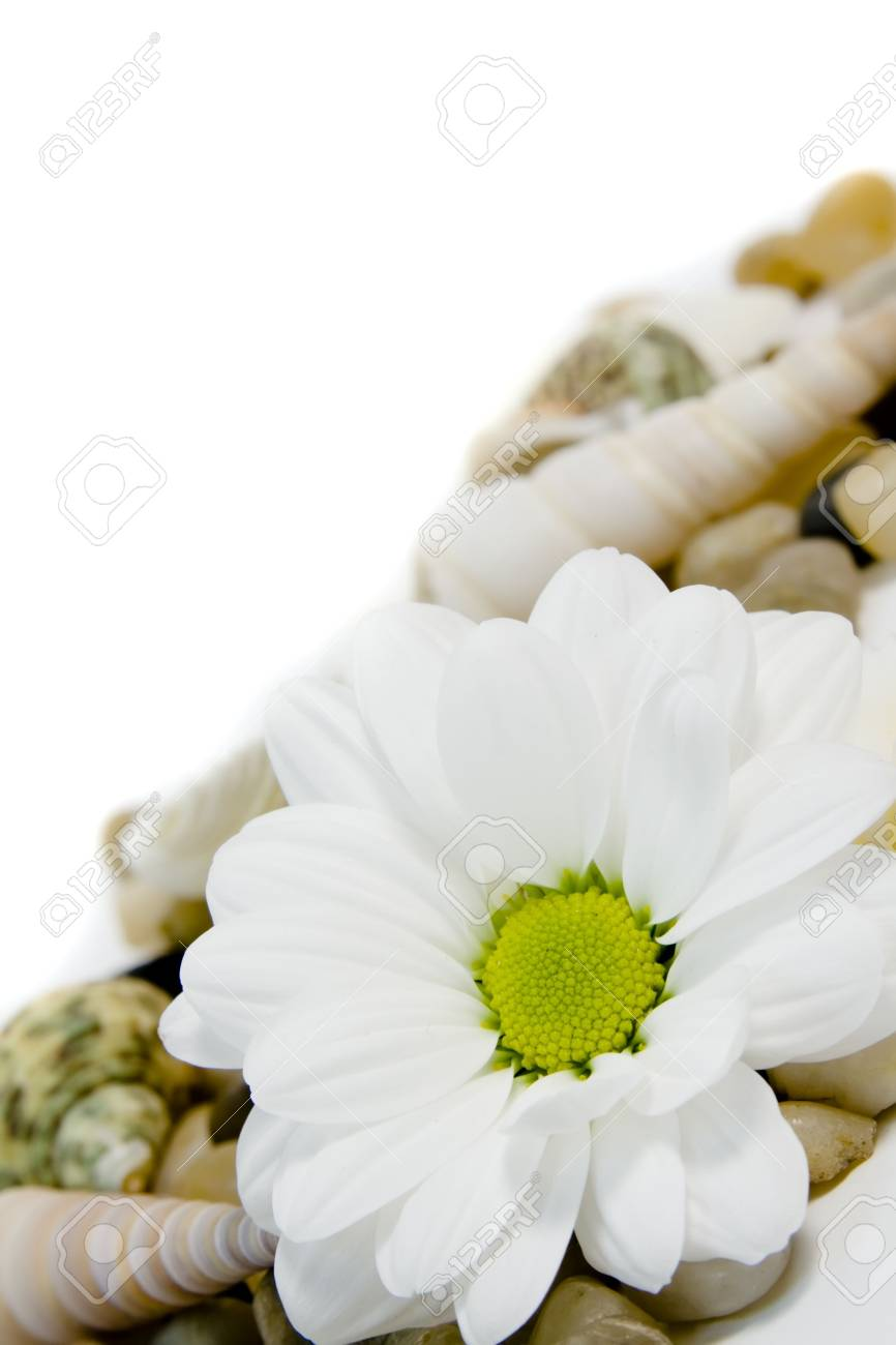 beautiful white daisy on colorful pebble stones with copy space Stock Photo - 3511028