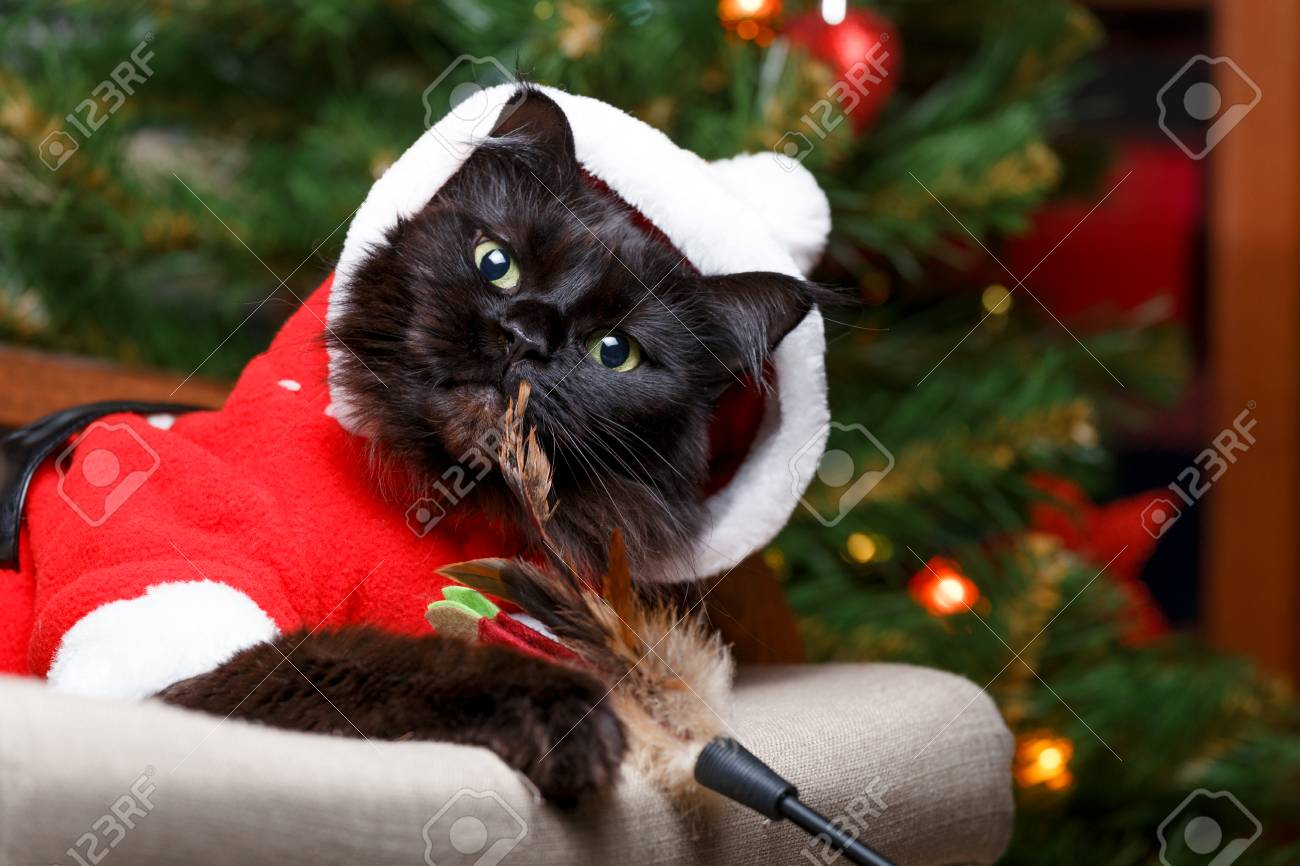 Image of black cat in Santa costume in armchair Stock Photo - 90021074 & Image Of Black Cat In Santa Costume In Armchair Stock Photo Picture ...