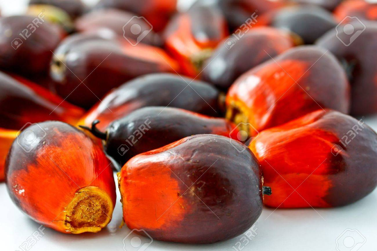 group of palm oil fruits Stock Photo - 12345468